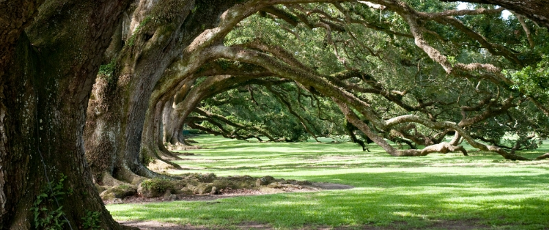 Homes With Land For Sale In Lake Charles Louisiana