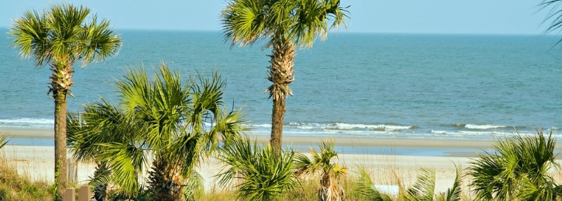 South Carolina header image