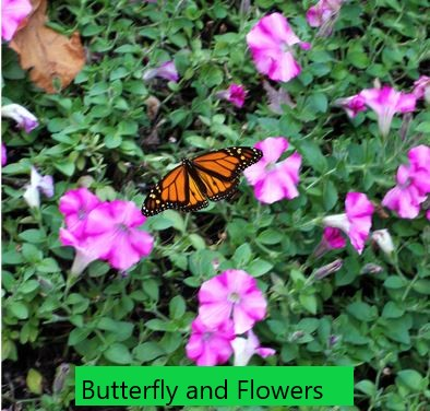 Butterfly and Flowers in Laurel RIdge