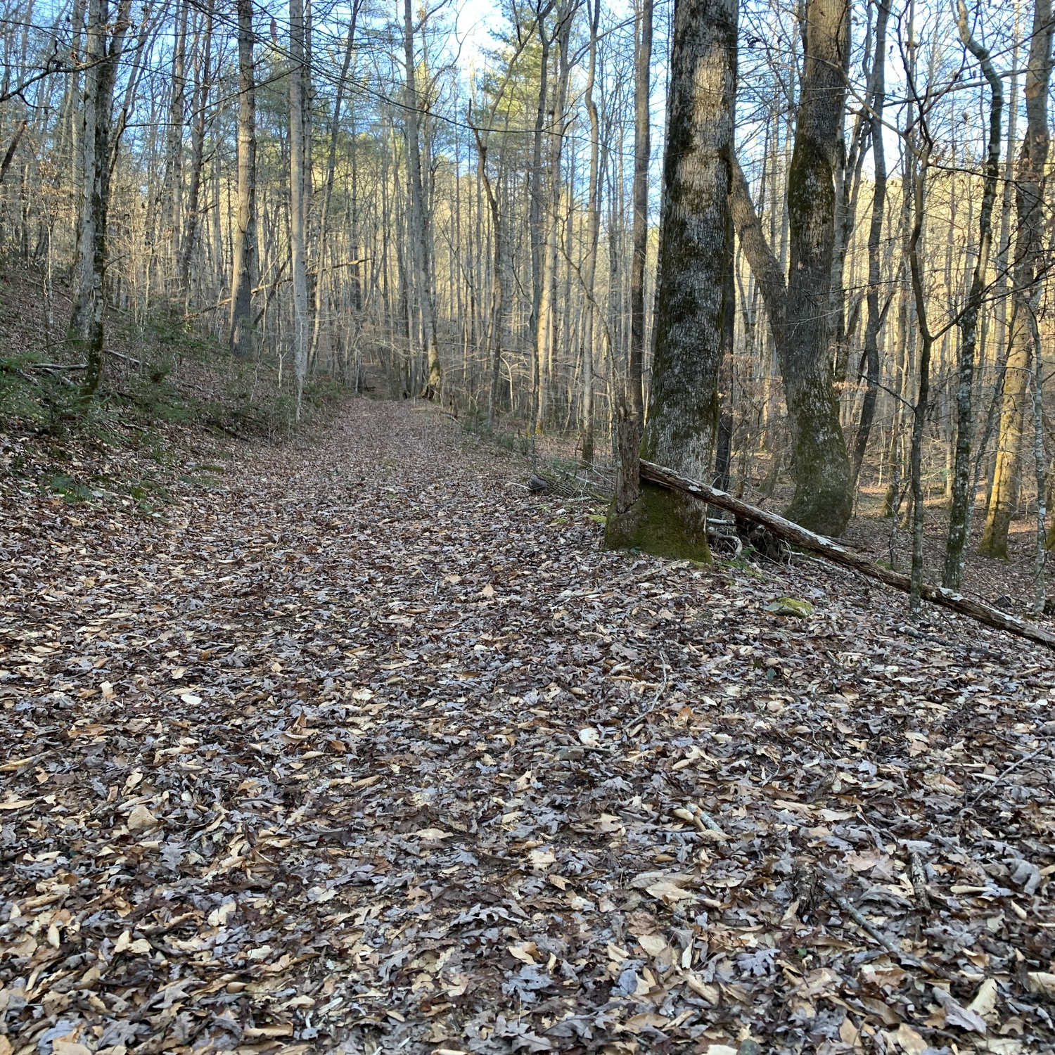 Logging roads run throughout the property